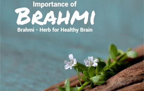 स्वस्थ मस्तिष्क और शरीर के लिए वरदान – ब्राह्मी